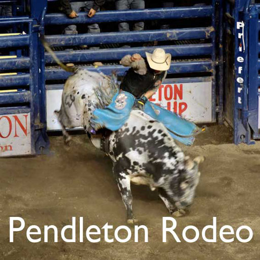 Pendleton Rodeo USA Reisebericht Reiseblog