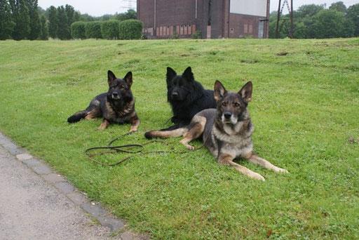 Dunja, Ambra und Ivanhoe