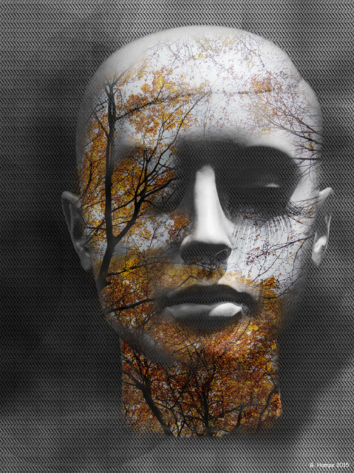 The silver head in the autumn