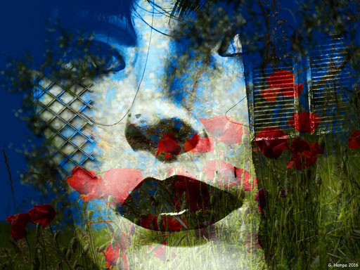 The white face and the poppies