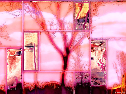 The abstract tree in the window