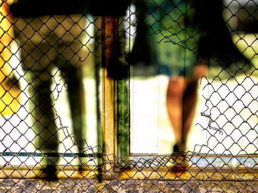 Walking behind the fence