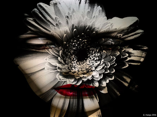 The face and the gerbera