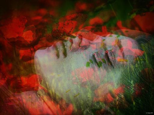Sleeping between the poppies