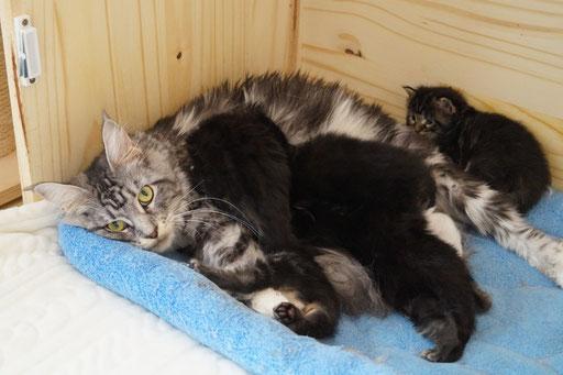 Julietta de l'Hypnose du Géant et sa marmaille : 3 mâles et 2 femelles nés le 25 juin 2016.