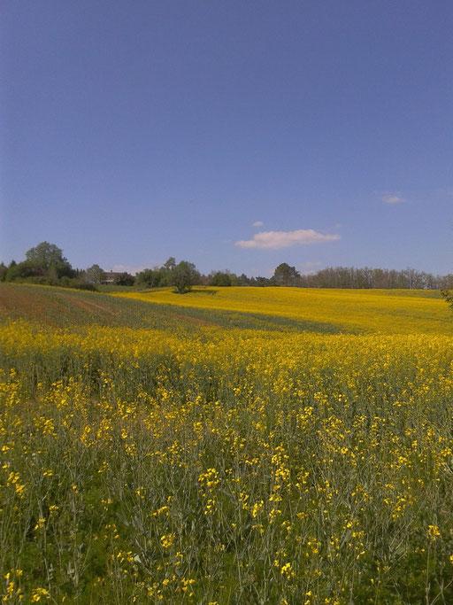 prairie au printemps - vue du gite depuis le sud