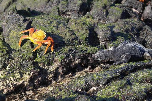 Mr.Crabs