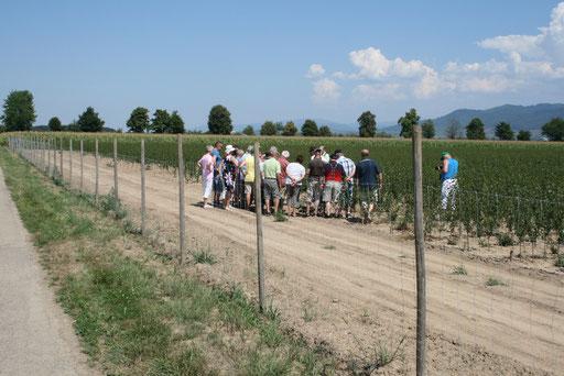 Besichtigung der Obstanbau Plantagen