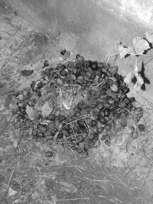 Auch ein Nest