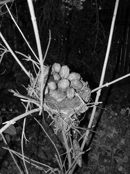 Herrliches Nuss-Nest