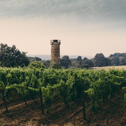 Vineyards, Chateau de Clermont, Pays de la Loire. France 2014