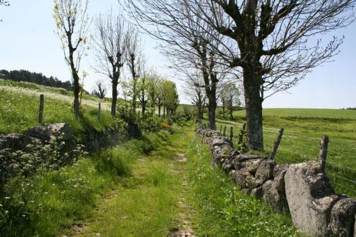 Petit chemin creux de La Besseyre à Pompeyrin
