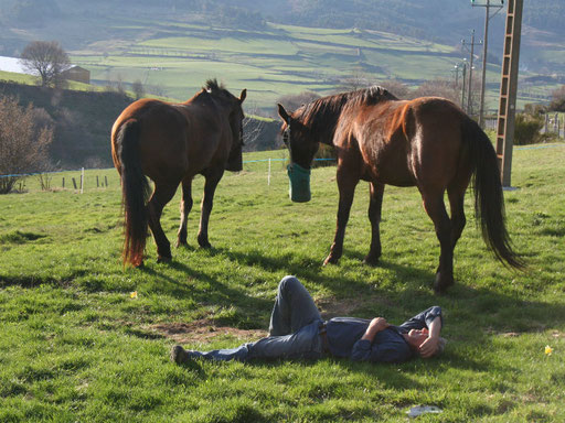 Repos des chevaux et des cavaliers en Margeride