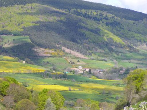 Mont Mouchet, au mois de mai, jaune de pissenlits,  domaine de la Bête du Gévaudan