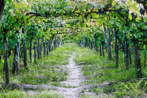 Wir bieten Ihnen handgemachte Weine, die regionstypisch ihr Terroir repräsentieren.