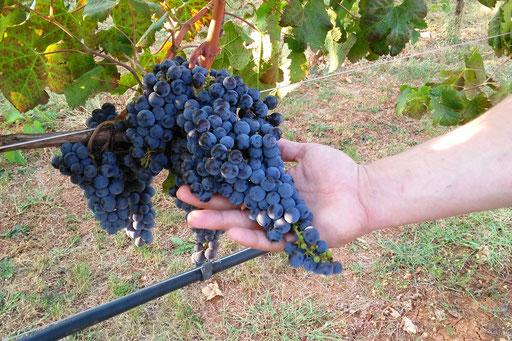 Wir bieten Ihnen ein handverlesenes, professionelles Wein- und Spirituosensortiment.