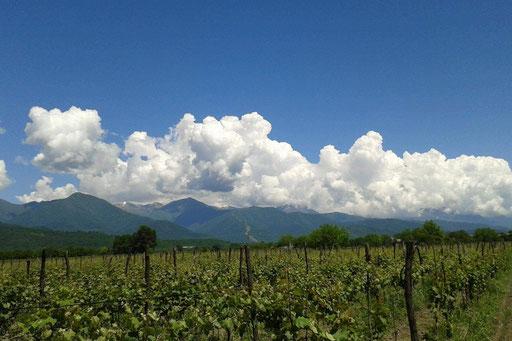 Wir setzen auf handgemachte, nachthaltige Weinwirtschaft - das schmeckt man mit jedem Schluck.