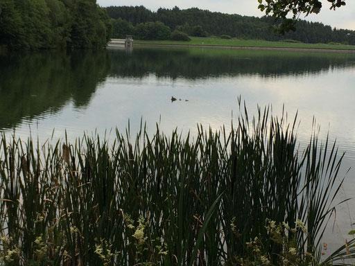 Am Abend beim spazieren verlieh die Dunkelheit dem Ort ein besonderen Touch. Ein Schnappschuss mit einer der Entenfamilien im See.