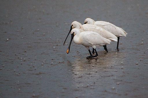 Drei im Regen - Löffler