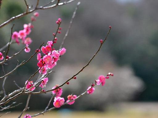 自然に囲まれた環境で、野外幼児教育を毎日行っている福岡県内でも数少ない森のようちえんです。