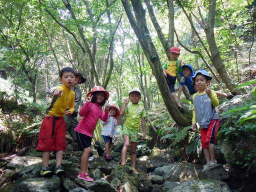 夏でも涼しい森の木陰。