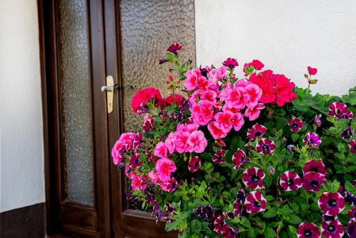 Blumen Eingang Gästehaus