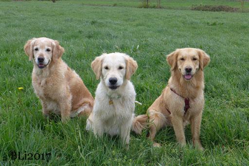 Blue, Maisie, Rosa - das Bild ist ein Glücksgriff - sie wollten nicht stille sitzen!