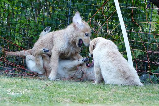 Ständig mussten wir die Kleinen aus dem Zaun pflücken