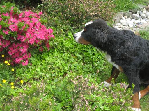 Gershwin und die Blumen