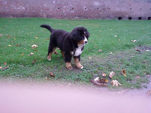 Quesna Dezember 2008