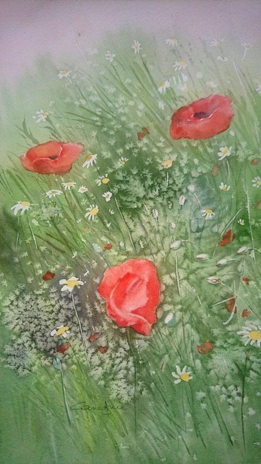Coquelicots et fleurs des champs n°10 17x27  (2018) Collection privée