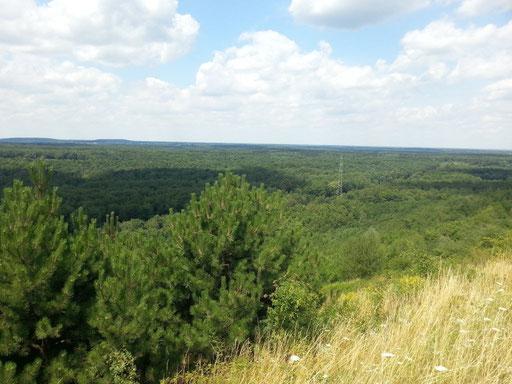 Blick auf das Naturschutzgebiet Kirchheller Heide