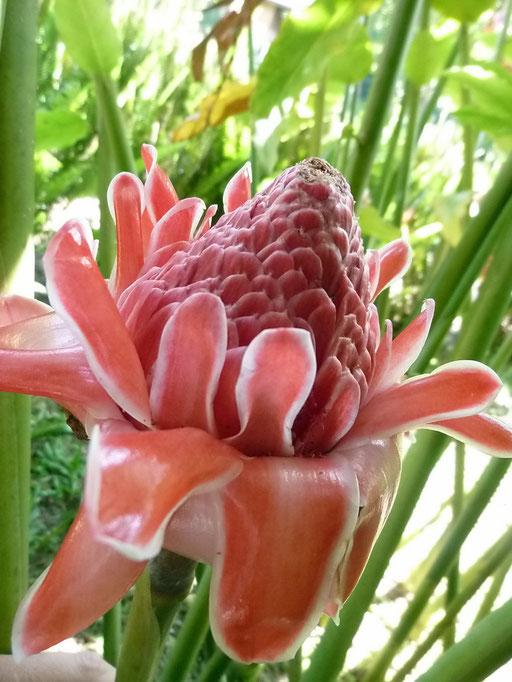 Welch schöne Blumen