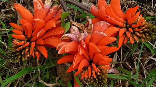 ... dafür wunderschöne Blumen
