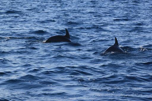 Männer-auf-Kurs Coaching Delfine