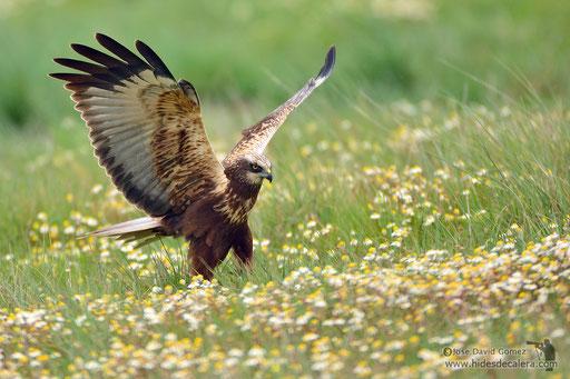 fotografía de aves desde hide fotografico