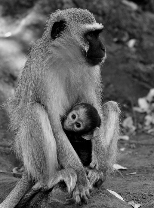 Kruger National Parc, South Africa