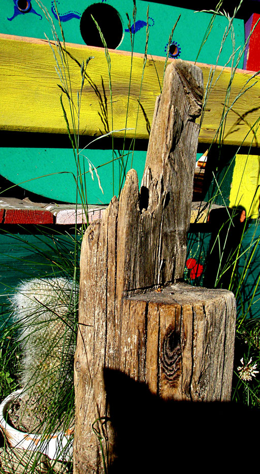 Holz Kaktus + cactus legno + wood cactus