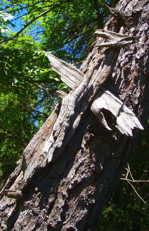 Pragser Tal Dolomiten Holz Kreuz + legno Dolomiti Braies croce + Dolomite wood cross
