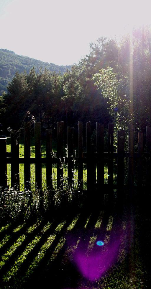 Sonnenuntergang im Wald + tramonto nel bosco + dusk in the forrest