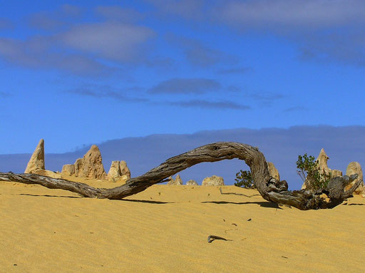 Die Pinnacles Desert im Nambung National Park, in der Naehe der Stadt Cervantes.