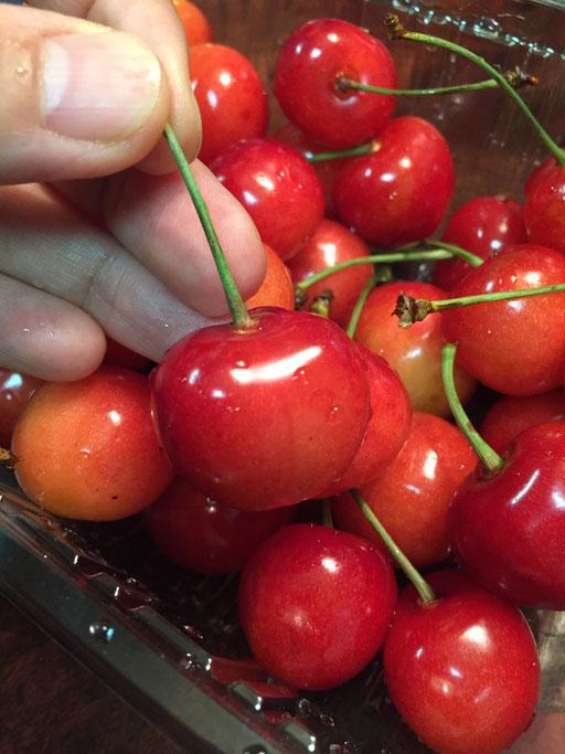 cherry, fruit of the season