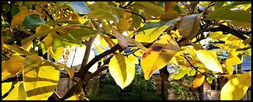 Houten Nestkastje voor Pindakaas pot , Nestkastje, kleur, Vogelhuisje bouwen, vogelhuisje pindakaas pot_12