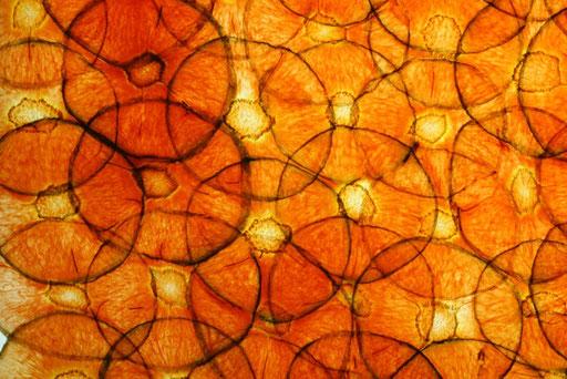 Bio Karotten Detail