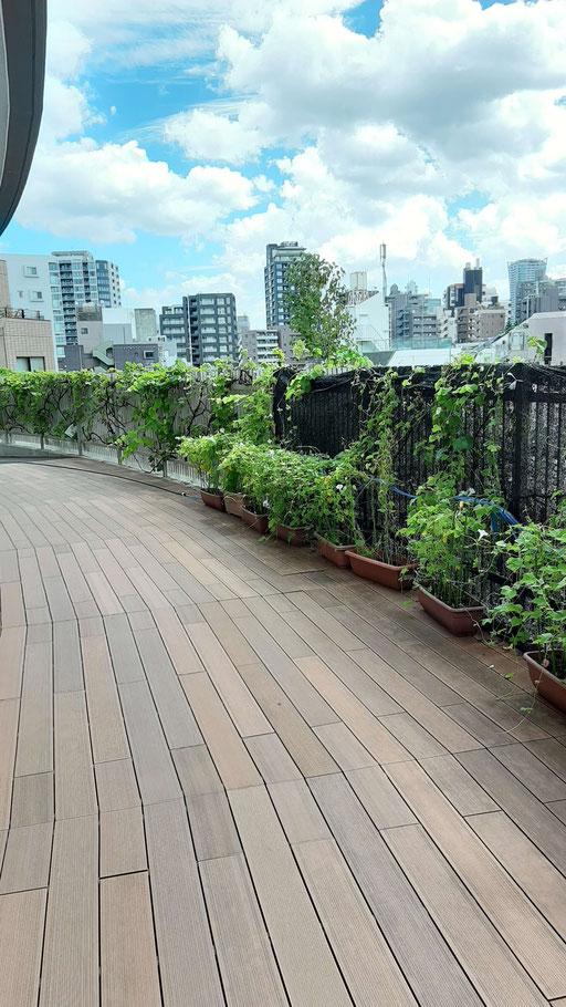 渋谷区内の代々木上原という都市部の住宅街ではありますが、園庭には、子どもたちが広場と、見晴らしのよいウッドデッキがあります。ウッドデッキにはブドウの木があり、収穫をしてブドウジュースにするそうです。