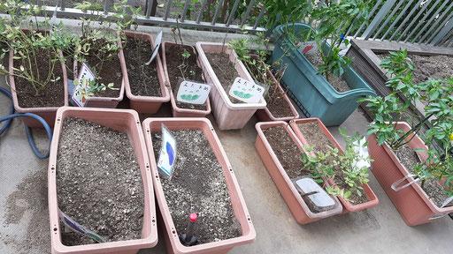 プランターで野菜の栽培もしています。ナスビ・落花生・パプリカ・枝豆などです。