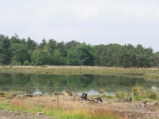 Heidelandschaft (Bild 2)