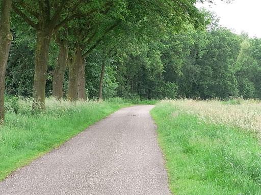Typische kleine Landstraße