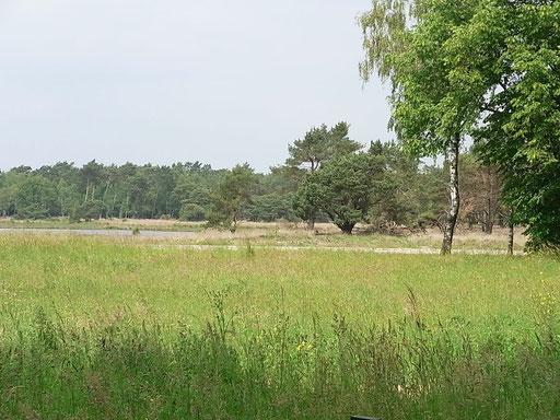 Heidelandschaft (Bild 3)