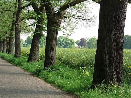 Allee zur Abtei mit altem Baumbestand